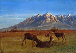 Deer in Mountain Home, c.1879 by Bierstadt | Painting Reproduction
