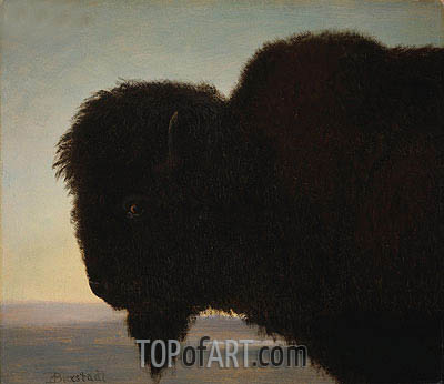 Buffalo Head, c.1879 | Bierstadt | Painting Reproduction