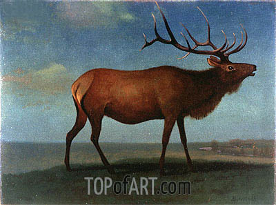 Bull Elk, indated | Bierstadt | Painting Reproduction
