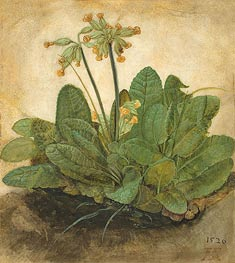 Tuft of Cowslips | Durer | Painting Reproduction