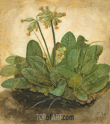 Tuft of Cowslips, 1526 | Durer | Painting Reproduction