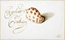 A Shell: Phalium Aureola | van der Ast | Painting Reproduction