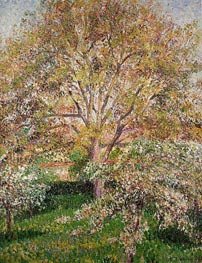 The Walnut and Apple Trees in Bloom at Eragny | Pissarro | Painting Reproduction