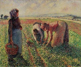 Picking Peas, 1893 by Pissarro | Painting Reproduction