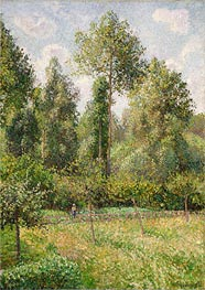 Poplars, Eragny, 1895 by Pissarro | Painting Reproduction