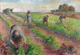 The Beet Harvest, 1881 by Pissarro   Painting Reproduction