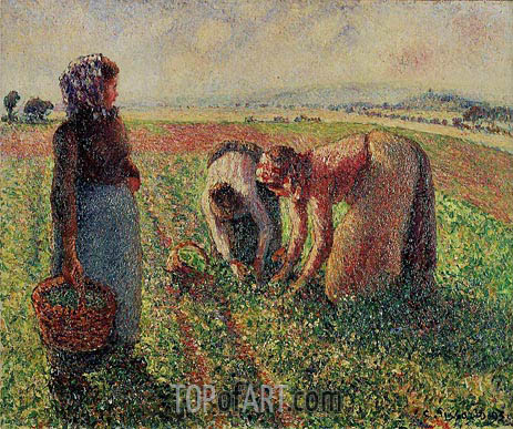 Picking Peas, 1893 | Pissarro | Gemälde Reproduktion