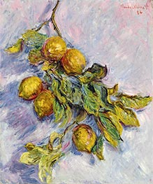 Lemons on a Branch, 1884 by Monet | Painting Reproduction