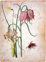 Narcissus, Iris, Fritillaria and Hornet | Georg Flegel | Gemälde Reproduktion