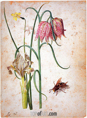 Narcissus, Iris, Fritillaria and Hornet, undated | Georg Flegel | Painting Reproduction