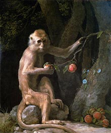 Portrait of a Monkey | George Stubbs | Gemälde Reproduktion