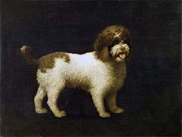 A Water Spaniel | George Stubbs | Painting Reproduction
