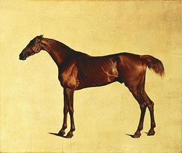 Rufus (Pangloss), c.1762/65 by George Stubbs | Painting Reproduction