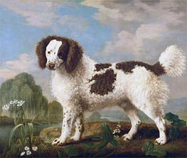 Brown and White Norfolk or Water Spaniel, 1778 von George Stubbs | Gemälde-Reproduktion