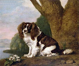 Fanny, a Brown and White Spaniel, 1778 von George Stubbs | Gemälde-Reproduktion
