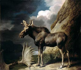 Moose, 1770 by George Stubbs | Painting Reproduction