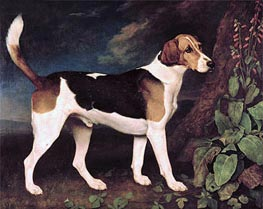 Ringwood, a Brocklesby Foxhound, 1792 by George Stubbs | Painting Reproduction