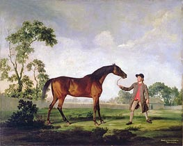 The Duke of Ancaster's Bay Stallion 'Spectator', Held by a Groom, c.1762/65 von George Stubbs | Gemälde-Reproduktion