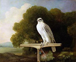 Greenland Falcon (Grey Falcon), 1780 by George Stubbs | Painting Reproduction