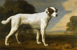 Viscount Gormanston's White Dog, 1781 by George Stubbs | Painting Reproduction