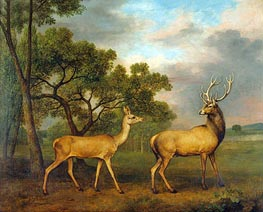 Red Deer, a Buck and a Doe | George Stubbs | Painting Reproduction