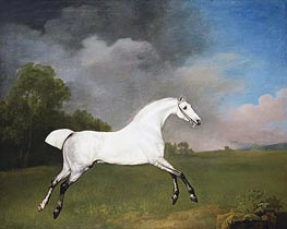A Grey Horse | George Stubbs | Painting Reproduction
