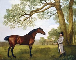 John Gascoigne with a Bay Horse, 1791 by George Stubbs | Painting Reproduction