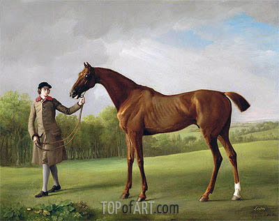 Lustre, held by a Groom, c.1760/62 | George Stubbs | Painting Reproduction