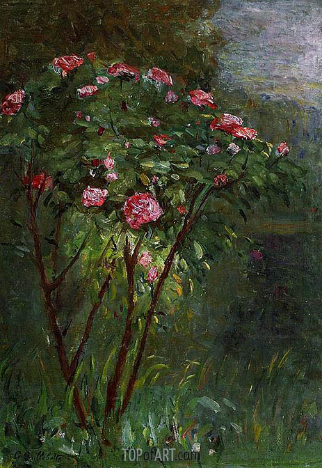 Rose Bush in Flower, 1884 | Caillebotte | Painting Reproduction