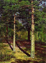 Pine Trees Lit Up by the Sun | Ivan Shishkin | Painting Reproduction