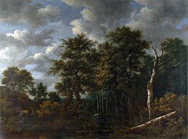 A Pool Surrounded by Trees, c.1665 von Ruisdael | Gemälde-Reproduktion
