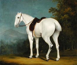 A Lady's Grey Hunter | Jacques-Laurent Agasse | Painting Reproduction