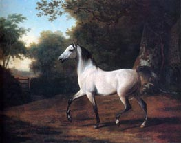 A Grey Arab Stallion in a Wooded Landscape, undated by Jacques-Laurent Agasse | Painting Reproduction