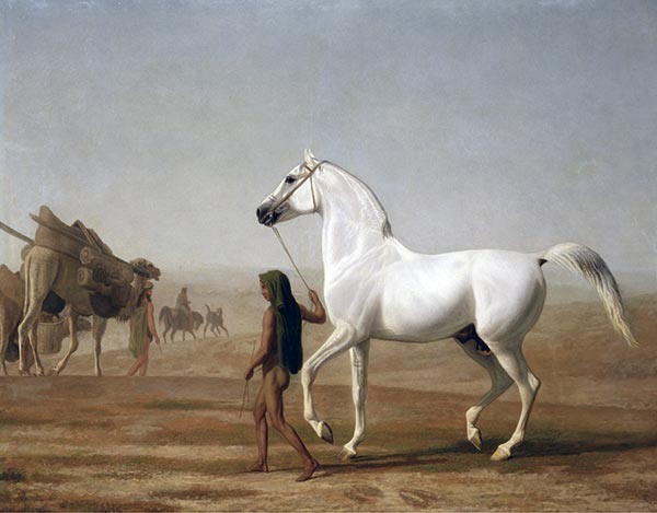 The Wellesley Grey Arabian Led through the Desert, c.1810 | Jacques-Laurent Agasse | Painting Reproduction