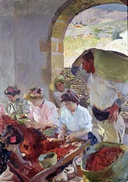 Preparing the Dry Grapes, 1890 by Sorolla y Bastida | Painting Reproduction