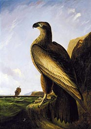 Washington Sea Eagle, c.1836/39 von Audubon | Gemälde-Reproduktion