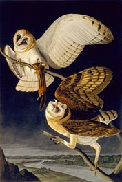 Barn Owl | Audubon | Painting Reproduction