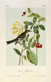 Least Flycatcher, a.1843 by Audubon | Painting Reproduction