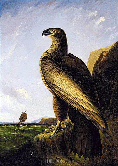 Washington Sea Eagle, c.1836/39 | Audubon | Painting Reproduction