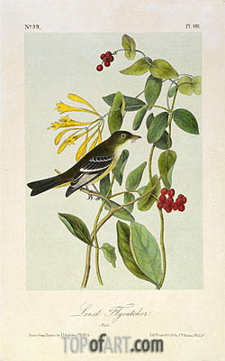 Least Flycatcher, a.1843 | Audubon | Painting Reproduction