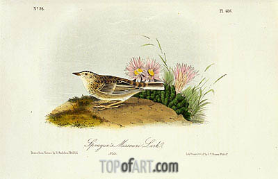 Sprague's Missouri Lark, 1844 | Audubon | Painting Reproduction