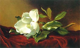 A Magnolia on Red Velvet, c.1885/95 von Martin Johnson Heade | Gemälde-Reproduktion