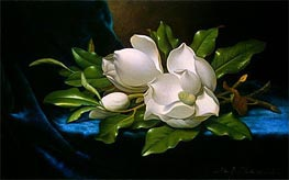 Giant Magnolias on a Blue Velvet Cloth | Martin Johnson Heade | Painting Reproduction