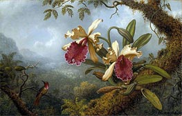 Orchids and Hummingbird | Martin Johnson Heade | Painting Reproduction