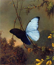 Blue Morpho Butterfly | Martin Johnson Heade | Painting Reproduction