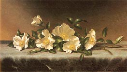 Cherokee Roses On A Light Gray Cloth | Martin Johnson Heade | Painting Reproduction