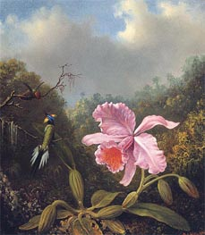 Fighting Hummingbirds with Pink Orchid | Martin Johnson Heade | Painting Reproduction