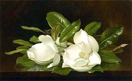 Magnolias on a Wooden Table, c.1883/88 by Martin Johnson Heade | Painting Reproduction
