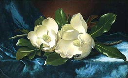 Magnolias on a Blue Velvet Cloth, c.1885/95 by Martin Johnson Heade | Painting Reproduction
