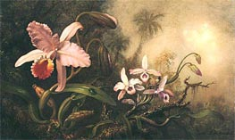 Orchids and a Beetle, c.1885/95 by Martin Johnson Heade | Painting Reproduction
